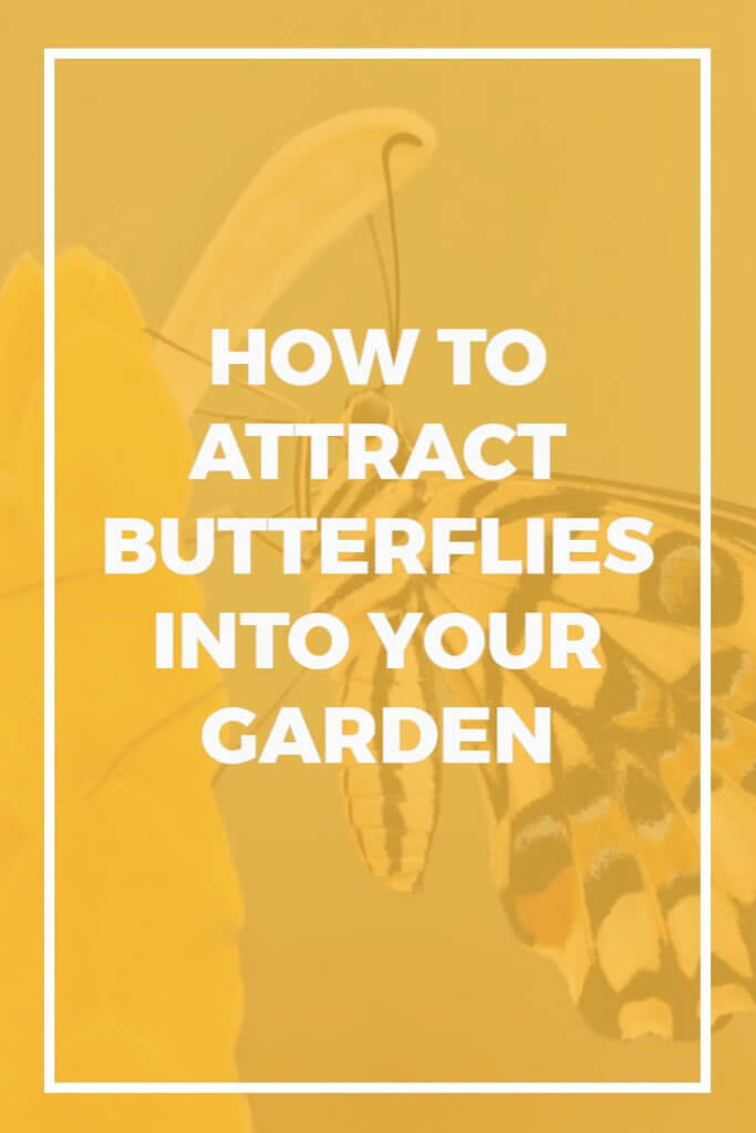 How to Attract Butterflies into Your Garden - Dreamley