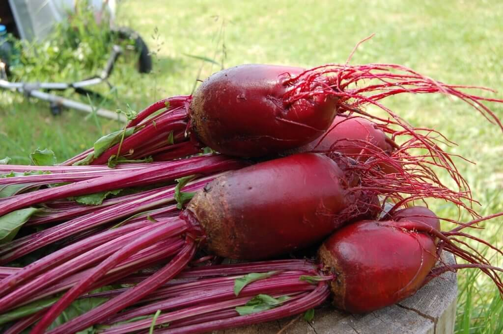 Beetroot Storage Ideas