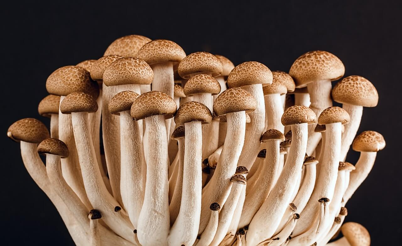 edible mushrooms photo