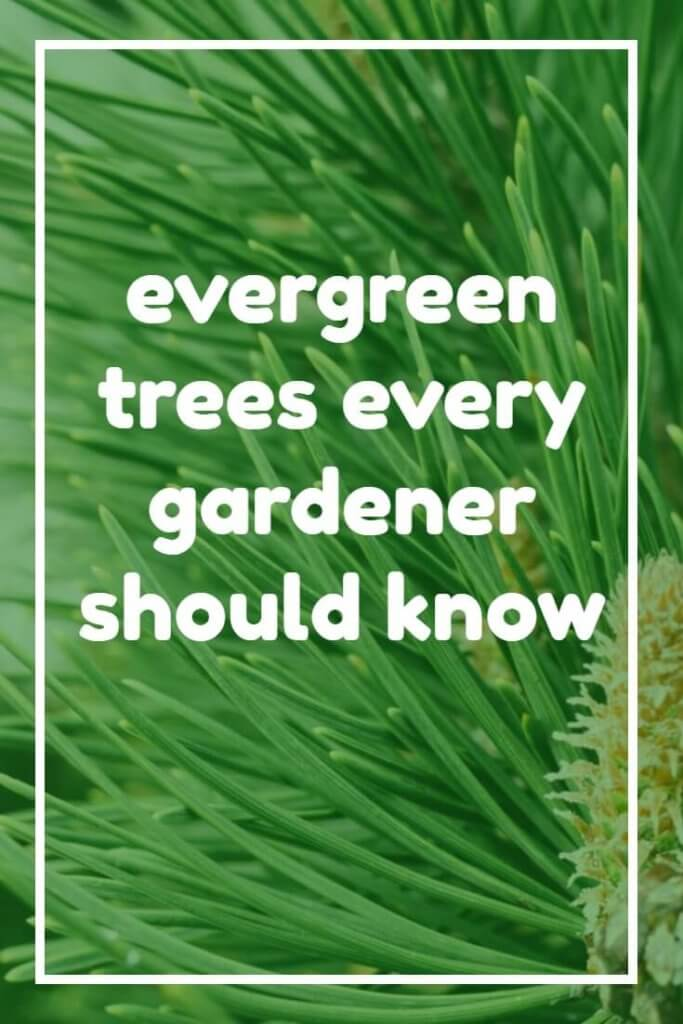 Fed up with a dull winter garden? Invest in evergreen trees and you'll have greenery right around the year. Ideal for making the most of the winter months, or as a source of screening.