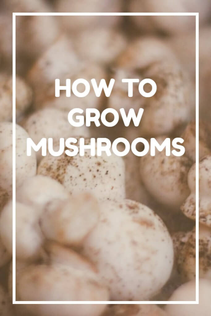 Complete mushroom growing advice, perfect for the gardener or smallholder. Growing mushrooms is quite a science, but once you get it right you'll be astonished at just how many mushrooms you really can produce at home.