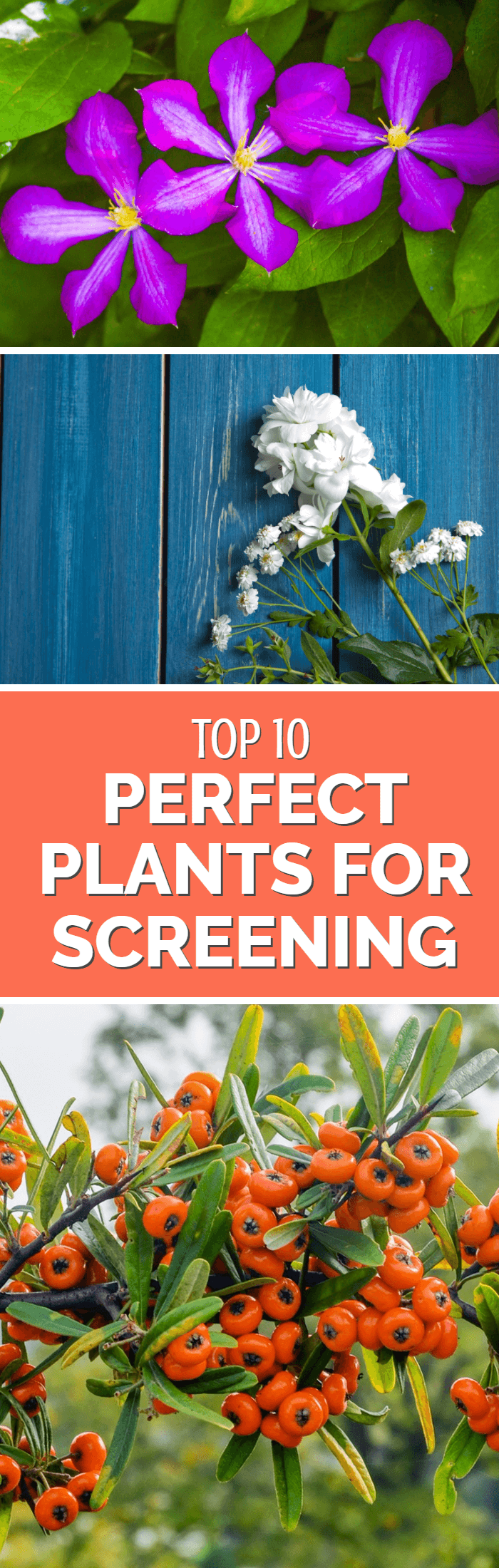 Need rapid garden screening? Don't put up another fence or a build a wall - instead try these perfect garden screening plants which will not only provide rapid privacy but will also look fantastic in your garden.