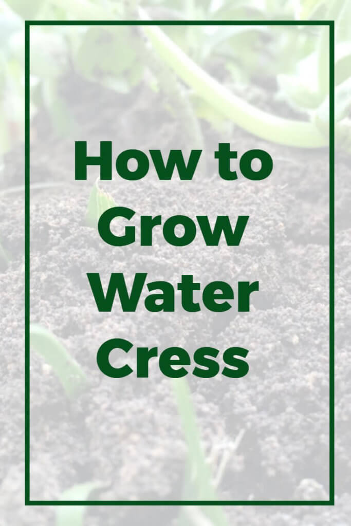 Watercress is truly a superfood - packed full of vitamins and minerals, and delicious to boot. However if you've always thought you needed a river to grow water cress then you might be pleasantly surprised. This guide shows how all gardeners can grow watercress even in a normal garden. Follow these guidelines for planting seeds, growing the plants, and harvesting your cress at the end.