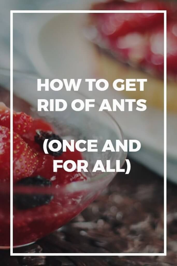 Ants can drive you mad during the warmer months, coming into your home and crawling over surfaces or even food. Disgusting! Once you understand the biology of ants, however, you start to realise that there are some proven ways to get rid of ants once and for all, even if you've been suffering for years. Pin this now to make sure you always have the information to hand if you need it!