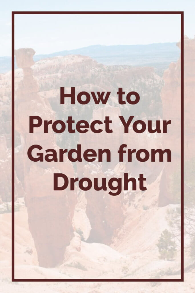 Over the last few years we've seen summer temperatures rising all the time, with rainfall in many parts of the country dropping. This creates a serious problem for those of us with  garden - our plans risk drying out like a desert. But there are ways to protect your precious plants from drought, by following these proven tips. Click here now to read the full story.