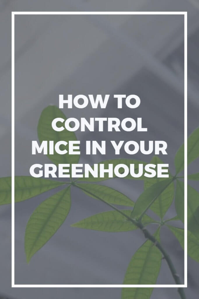 Struggling with mice in your greenhouse, shed or garage? Try out these tips to rid yourself of rodents, and rest easy once again!