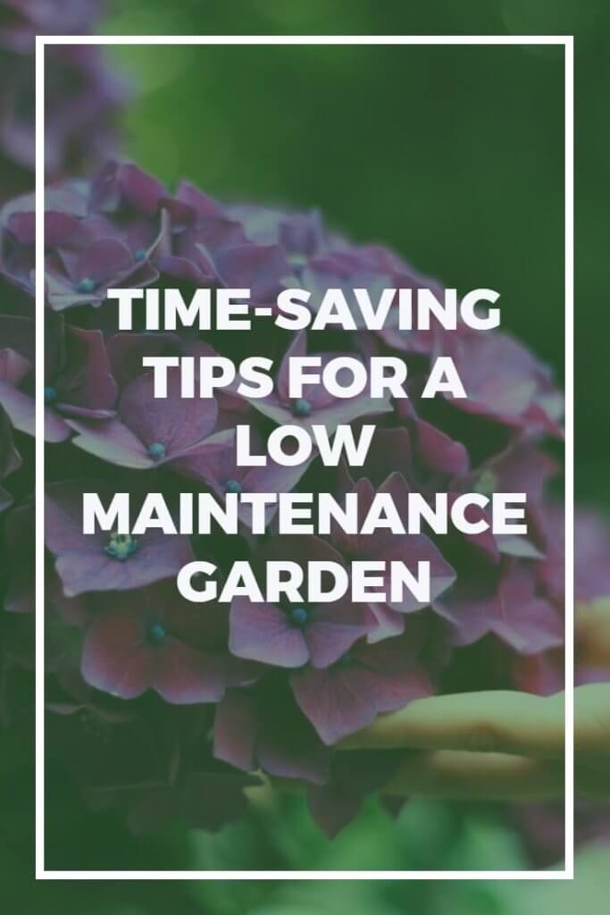 Owning a garden doesn't have to take up huge amounts of time. With the tips in this article you'll discover how to save time by starting a low maintenance garden to be proud of.
