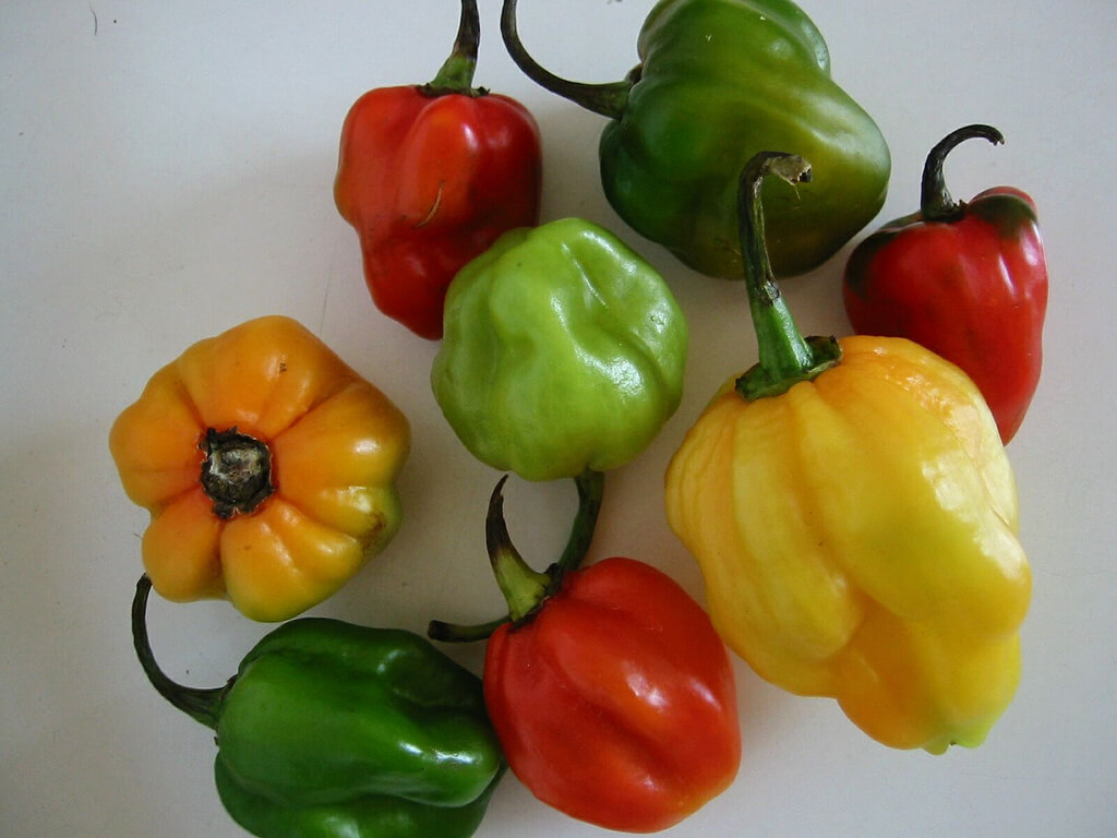 scotch bonnet photo