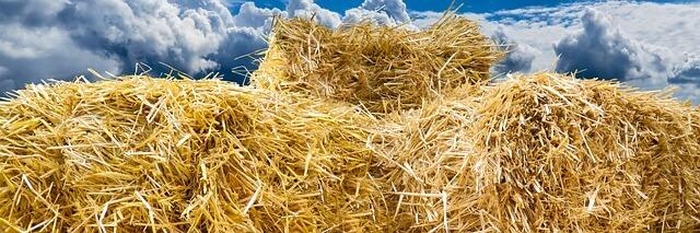 straw bale photo