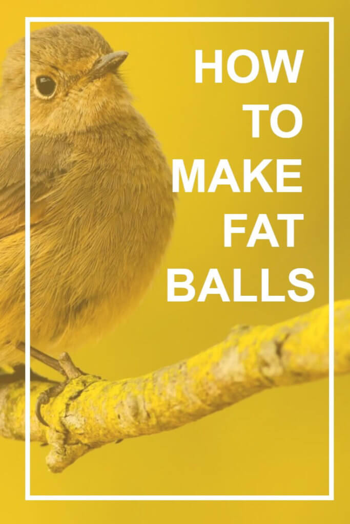 Wondering how to make fat balls to feed your garden birds? Follow this simple recipe and make feeding the birds in your garden cheaper than ever before...