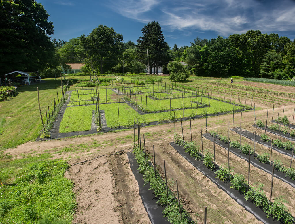 garden rows photo