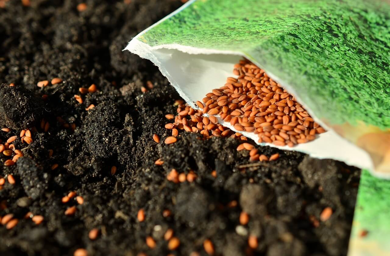 seed sowing photo