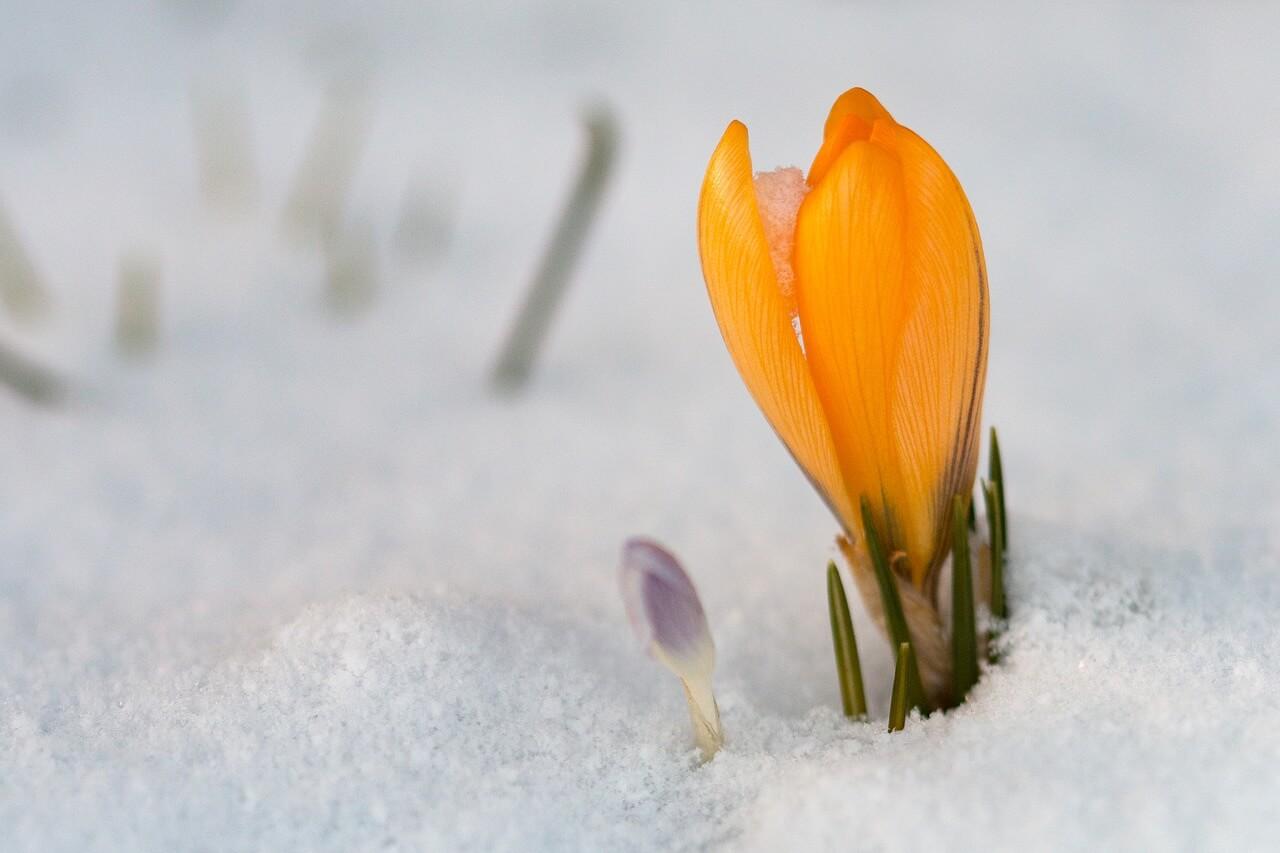 winter garden photo