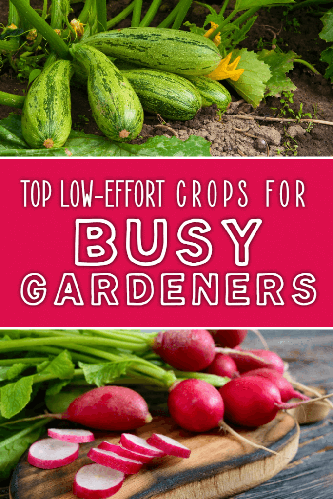 What are the best low effort crops for busy vegetable gardens and smallholders? These suggestions require almost no ongoing maintenance but produce loads of food at the end of the growing season.