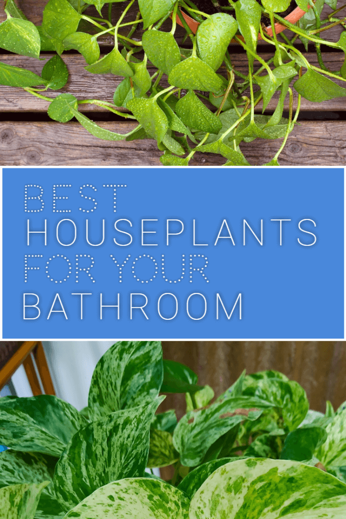 What are the best house plants for bathrooms? Bathrooms can be difficult places for houseplants to thrive because they're dimly lit and very humid, but a few key plants will survive - here's a full list of them.