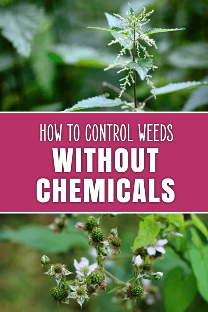 Organic, natural and chemical-free ways to keep your garden or yard weed free.