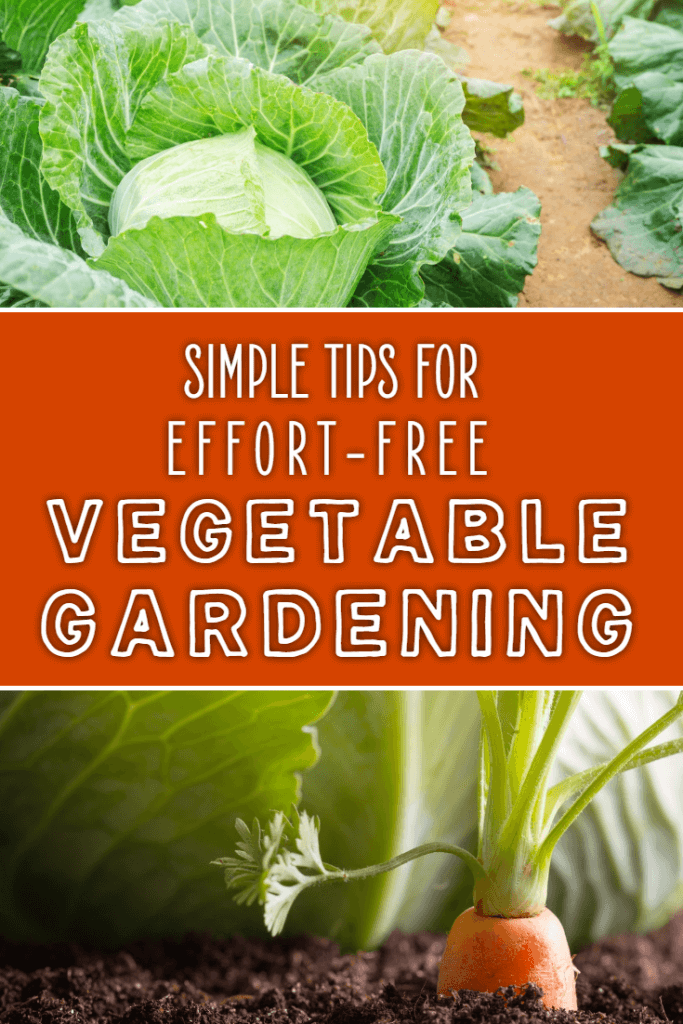 Simply tips for effort-free vegetable gardening. If you want to grow your own vegetables but you don't have much time then these tips will help your vegetable garden to thrive in no time at all.