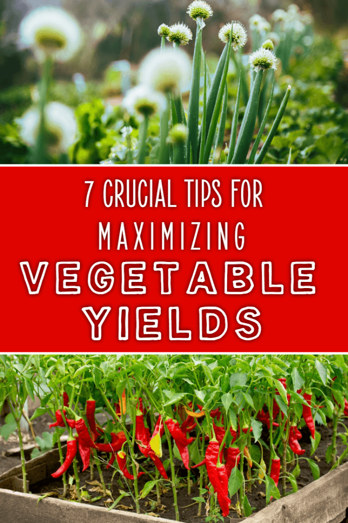 Want to grow more vegetables in a limited space? If so, these tips will help you to maximize your crop yields to a level you won't believe!