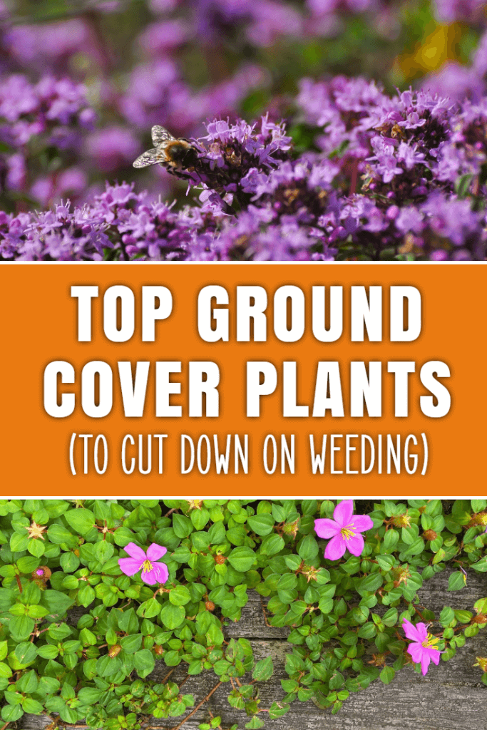 Top ground cover plants and flowers for your garden. Find out what you can grow to cover bare soil and reduce the amount of weeding that you have to do.